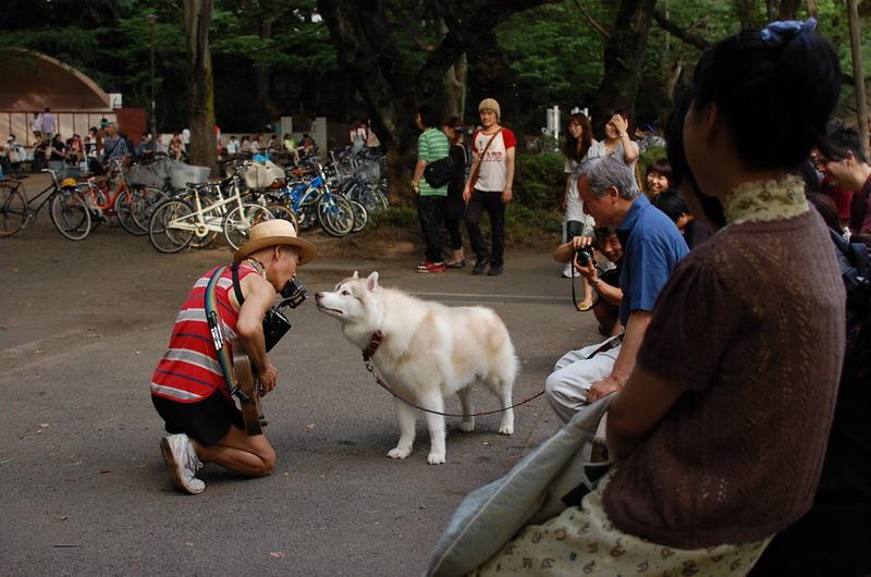 ギター奏者と犬2