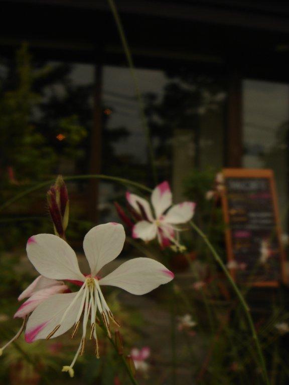 M・Cの庭と花