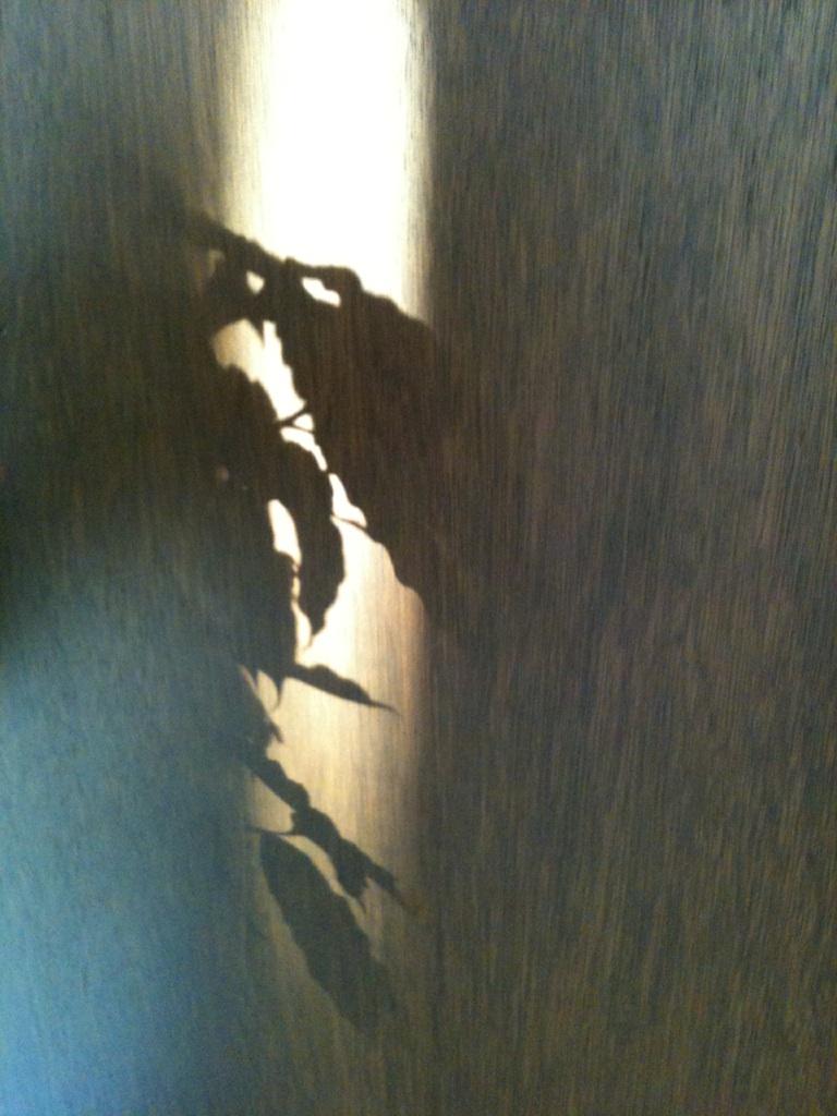 moblog_d2071b8c.jpg