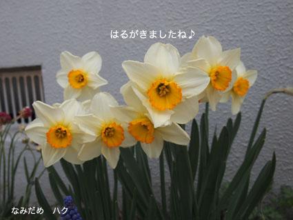 P4187086.jpg