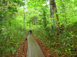 森の木道 尾瀬