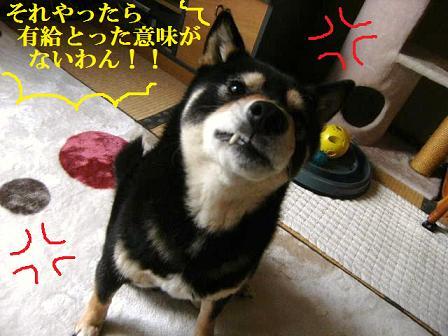 DSCF4221_20120326225453.jpg