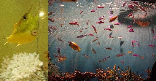 変な魚とカラフルな魚