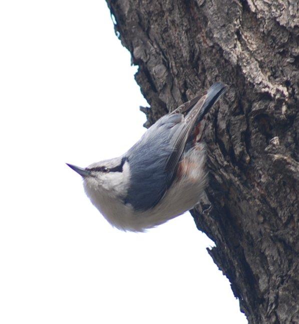 bird12-2.jpg