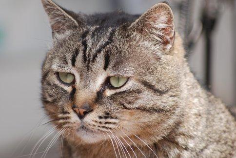 cat11-1-1.jpg