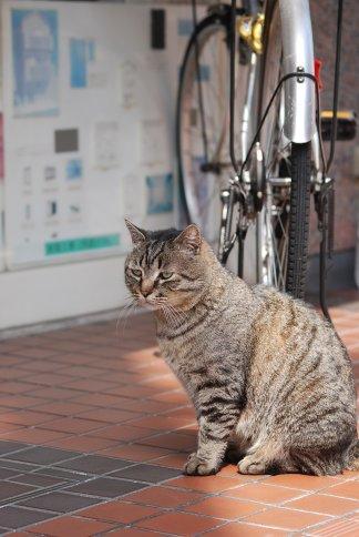 cat11-1-2.jpg