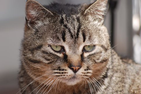 cat11-1-3.jpg