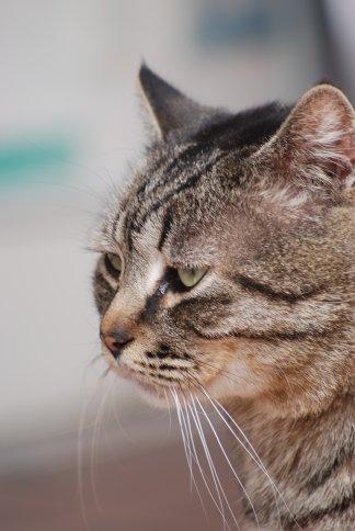cat11-1-4.jpg
