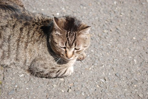 cat11-1-5.jpg