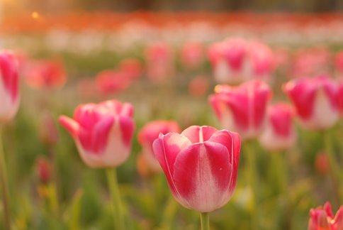 flower12-10.jpg