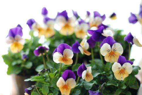 flower12-11.jpg