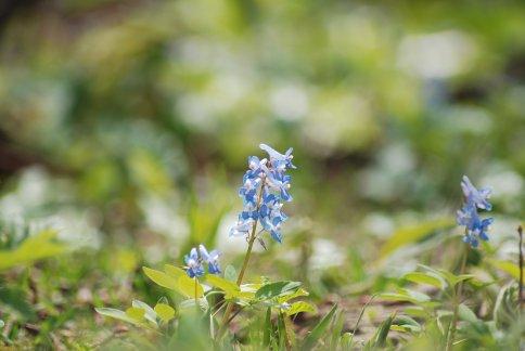 flower12-15.jpg