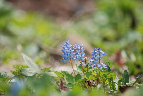 flower12-16.jpg