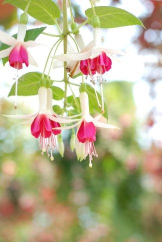 flower12-5.jpg