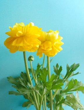 flower12-7.jpg
