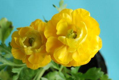 flower12-8.jpg