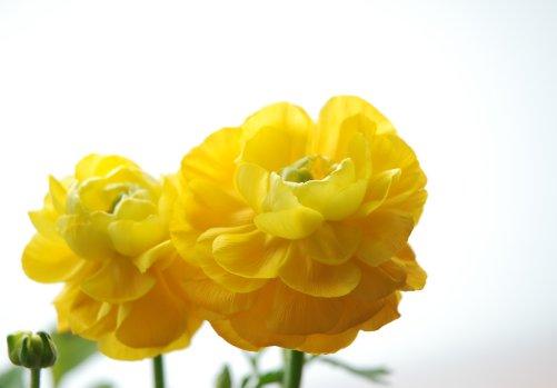 flower12-9.jpg