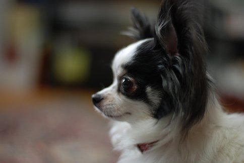 tdog12-1.jpg