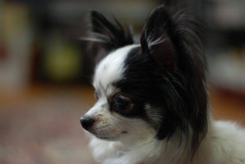 tdog12-2.jpg