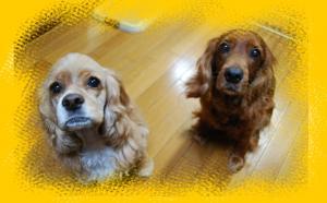 2008.11ナナ&アリス