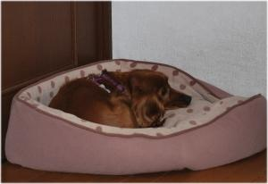 2008.12.31ナナ