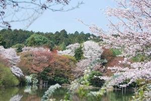 京都・竜安寺庭