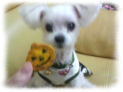 メリーちゃん&かぼちゃクッキー