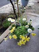 お花も黄色