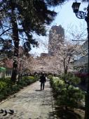 花の道からジオタワー