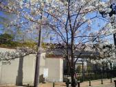 花の道から阪急電車