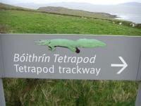 tetrapod4