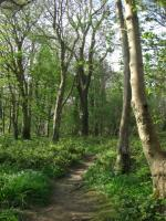 howthforest04091