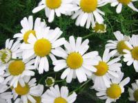 flowerflower09
