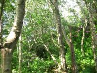 forestwalkmonday
