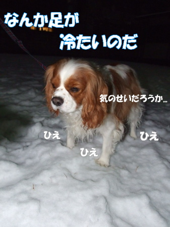 20080211(1).jpg