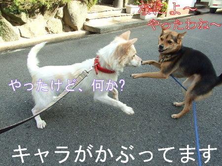 kimemo10.jpg