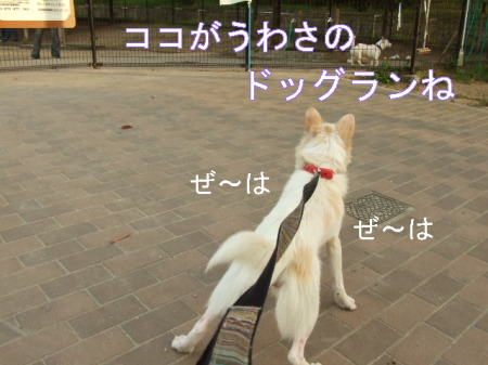 kimemo11.jpg