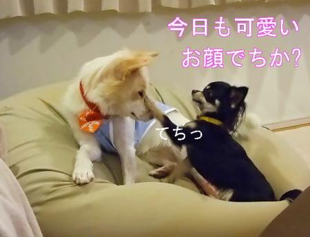 kimemo19.jpg