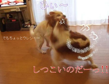 kimemo3.jpg