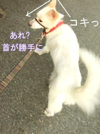 kimemo4.jpg
