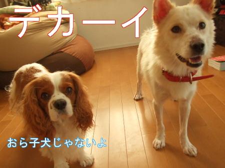 kimemo7.jpg