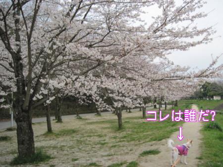 kina041.jpg