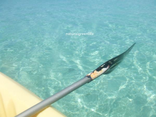 海はキレイ