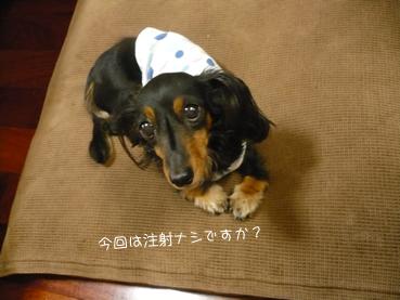 maro_chuusha-02.jpg