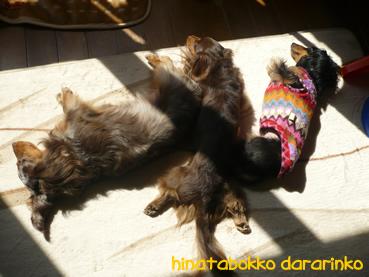 maro_hinatabokko03.jpg