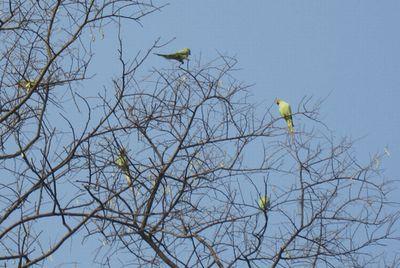 parrot_20100426150746.jpg