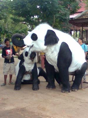 ayutthaya_elephant.jpg