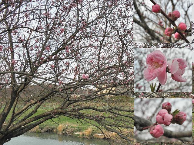 桃の花改造