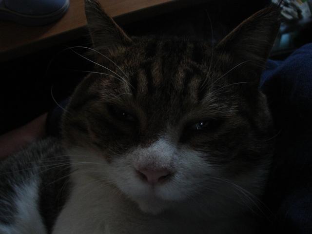 2011 11 21  1_