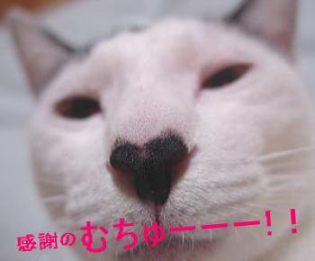 05_0411_3.jpg